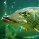 Рыбалоў