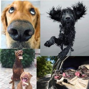 Собаки и все, все, все