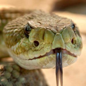 Мир змей / World of snakes
